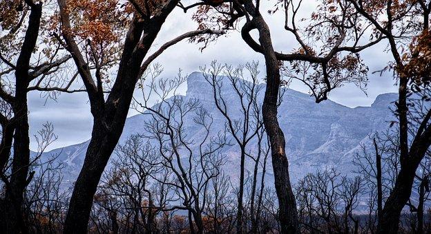 Bushfire, Trees, Smoke, Australia, Sky, Clouds, Grey