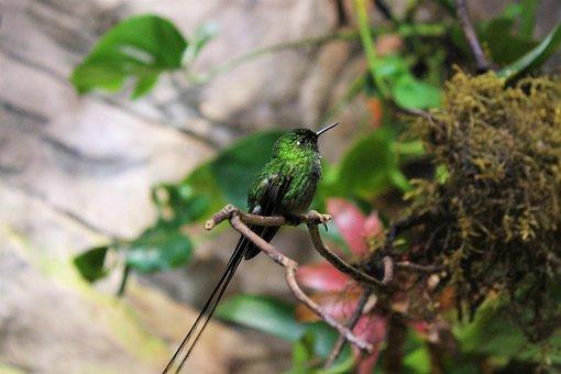 Hummingbird, Tiny, Small, Bird, Animal, Animal World