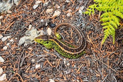 Salamander, Animal Photography, Nature, Animal World