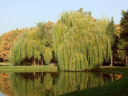 Lake, Water, Trees, Calm, Peaceful, Mood
