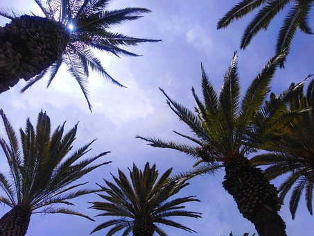Palms, Plants, Green, Sky, Clouds, Plant, Nature