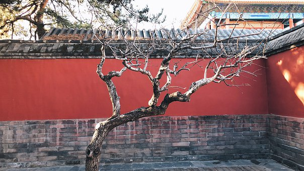 China, Ancient Times, Building, Tree, Red