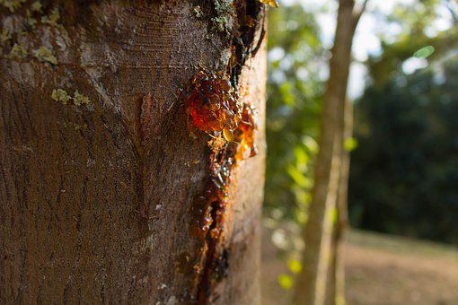 Sap, Tree, Bark, Texture, Naturals, Natural, Nature