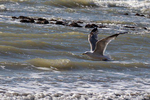Animal, Flight, Bird, Seagull, Side, Sea, Opal, Nature
