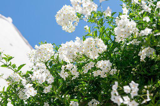 Flowers, White, Spain, Beautiful, Spring