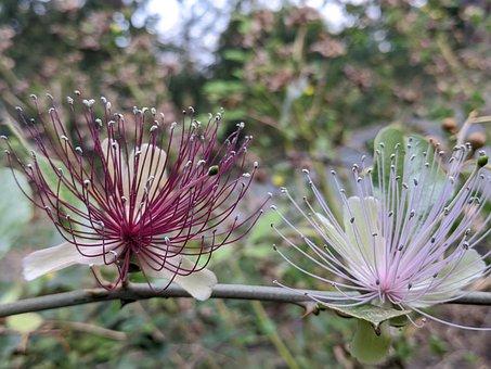 Flower, Plant, Spring, Bloom, Garden