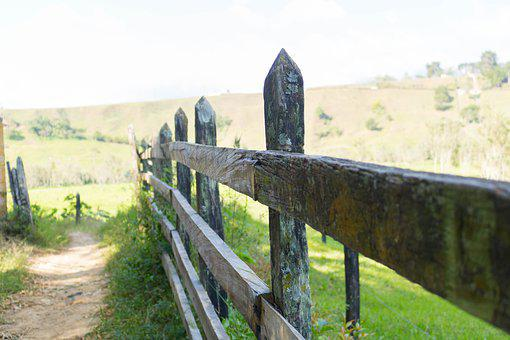 Wood, Braces, Posts, Stakes, Close, Path, Green