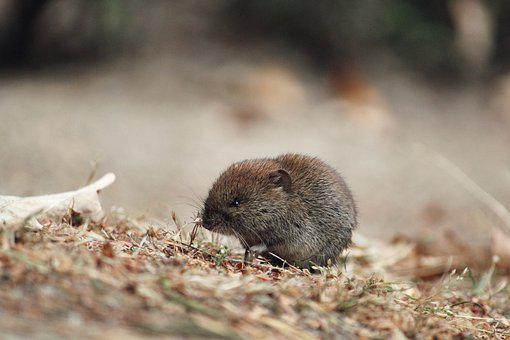 Mouse, Field Mouse, Sweet, Small, Autumn, Ground, Earth