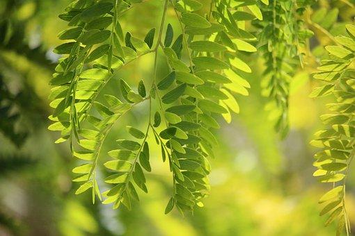 Green, Nature, Tree, Lime, Lush