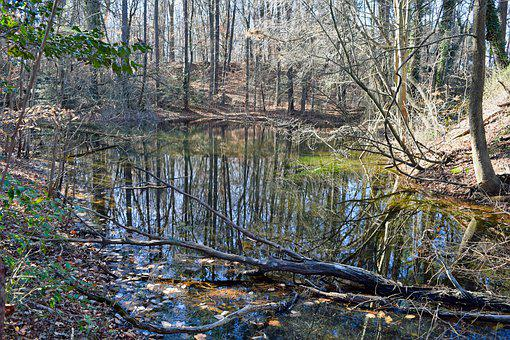 Reflection, Pond, Water, Forest, Trees, Marshland, Park