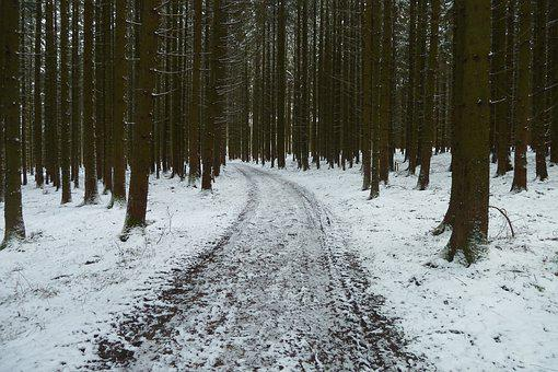 Forest, Way, Path, Nature, Trees