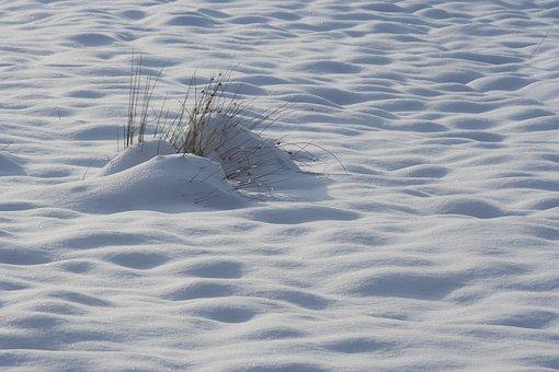 Snow, Frozen, Winter, Arctic, Morgenstimmung