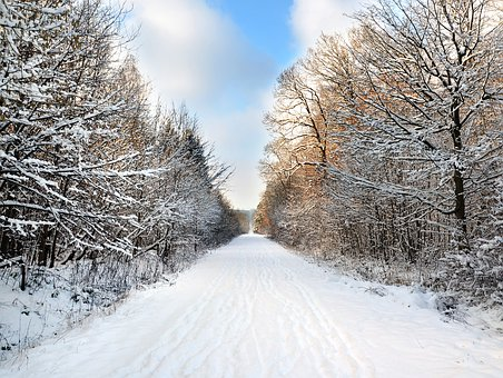 Winter, Forest, Nature, Cold, Trees, Snow, Road, White