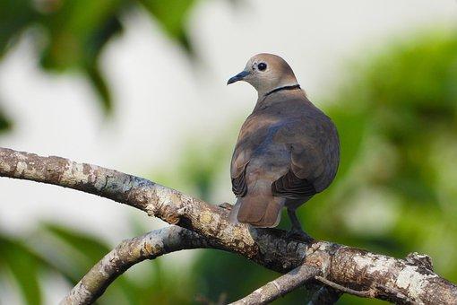 Bird, Perching Bird, Tree Branch, One Bird, Animal, Sky