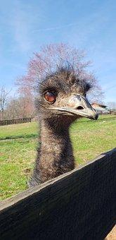 Ostrich, Animal, Cute, Hello