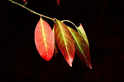 Leaf, Autumn, Colorful, Nature, Mood