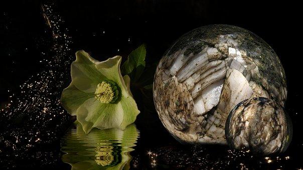 Christmas Rose, Stone Ball, Ball, Anemone Blanda