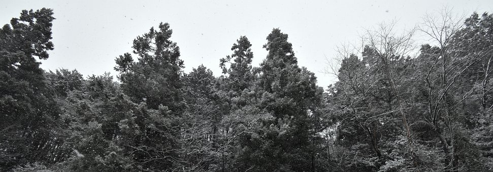 Snow, White, Black, Winter, Cold