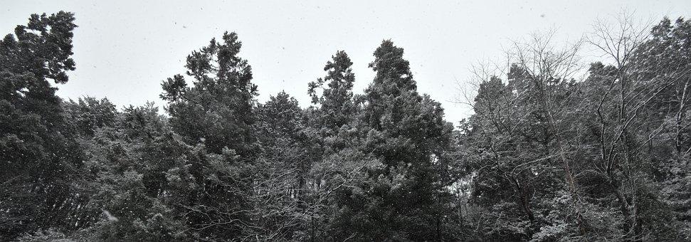 Snow, White, Black, Winter, Cold