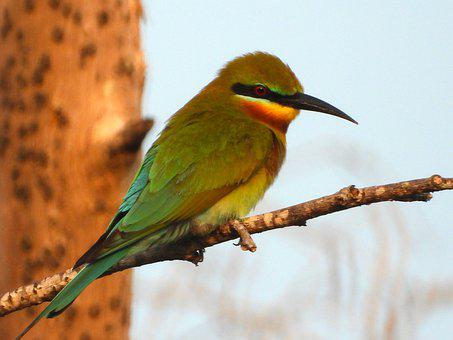 Sank, Bean Bird, Twigs, A, Animal, Sky, Cool, Dove