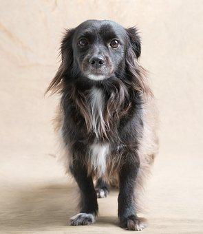Dog, Studio, Black, Pet, Animal, Portrait, Canine