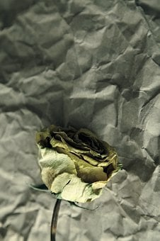 Wilted, Yellow, Faded, Wilt, Dead, Dry, Dried, Wilting
