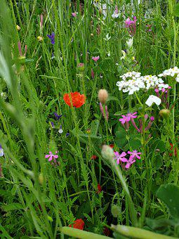 Flowers, Meadow, Spring, Flower Meadow