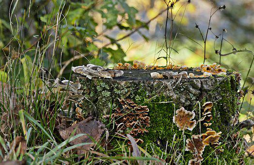 Tree Stump, Mushrooms, Forest, Autumn