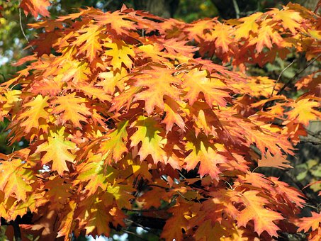 Autumn, Yellow, Holidays, Wood, Foliage, Forest, Nature