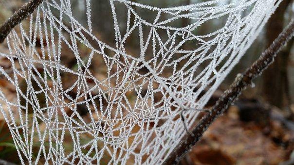Cobweb, Frozen, Frost, Cold, Nature, Spider