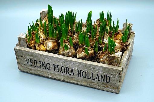 Tulips, Onions, Spring, Flower, Garden