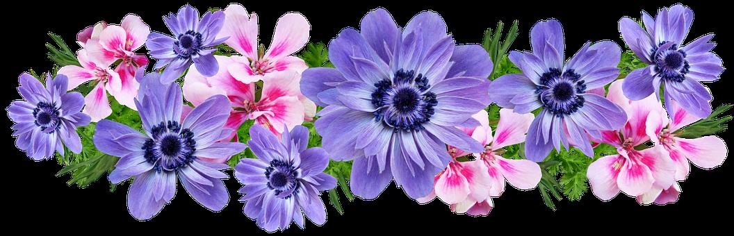 Flowers, Anemone, Geraniums, Arrangement, Cut Out