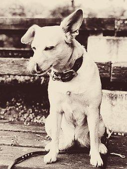 Dog, Happy Dog, Bitch Happy, Animal, Portrait, Friend