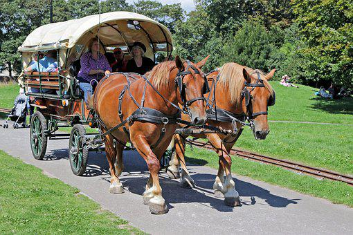 Horse And Cart, Horse Drawn Cart