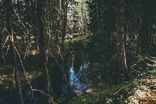 Forest, Woods, Nature, Landscape, Trees, Blue Water