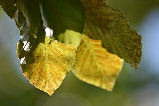 Leaf, Nature, Fall, Leaves, Green, Landscape, Forest