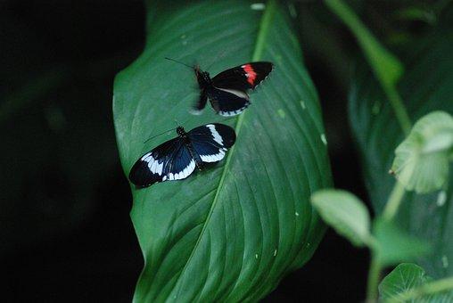 Butterflies, Mating, Good Times, Beautiful