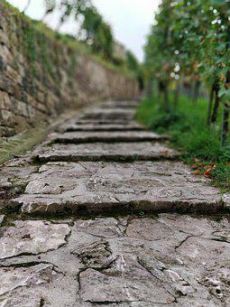 Vineyard, Away, Old, Nature, Winegrowing