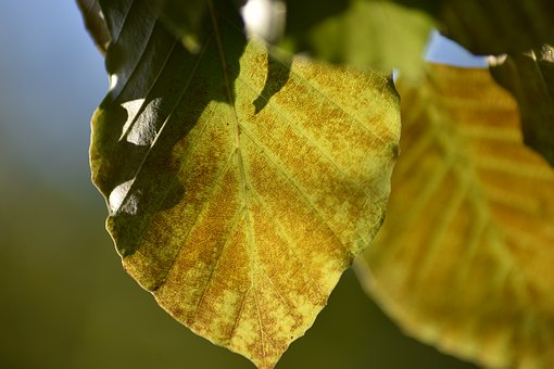 Leaf, Nature, Fall, Oise, Picardie, Sap