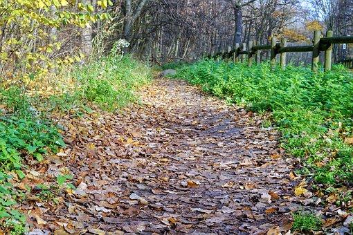 Landscape, Road, Path, Forest, Fence, Wood, Autumn