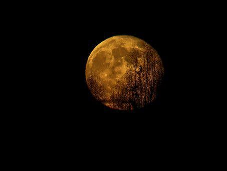 Moon, Moonrise, Yellow, Space, Astronomy, Nature
