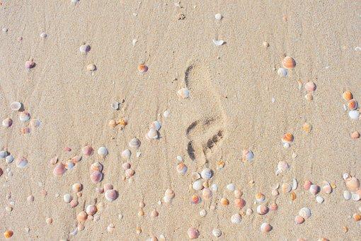 Coast, Sand, Track, Footprints In The Sand, Seashells