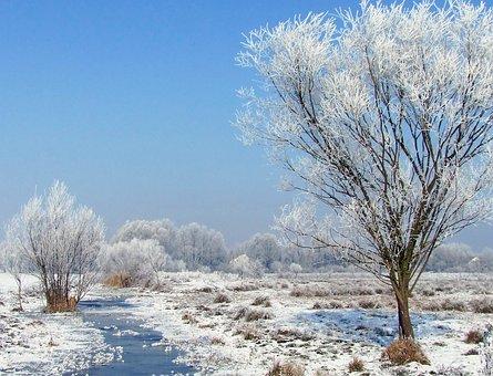 Winter Landscape, Snowy, Hoary, Frozen, Frosty, Rimy
