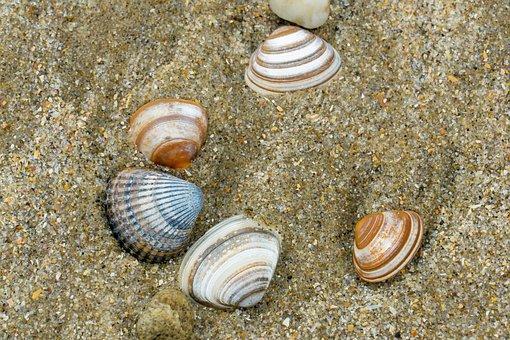 Mussels, Beach, Sea, Sand, Bank