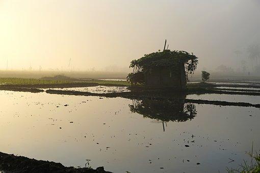 Farm, Rice, Agriculture, Nature, Cambodia, Farmer, Bali
