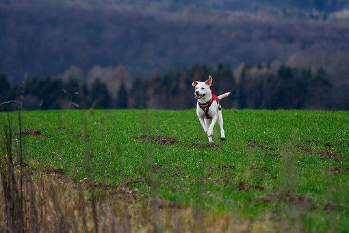 Dog, Animals, Pet, Cute, Charming, Meadow, Nature