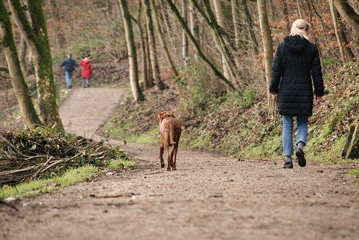 Dog, Walk, Animal, Nature, Pet, Hiking
