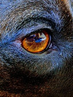 Dog Eye, Eye, Brown Eye, Animal Eye, Reflection, Dog