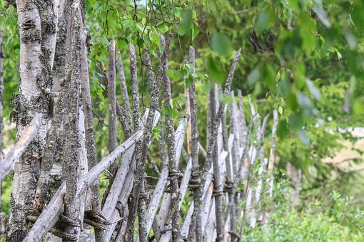 Fence, Trees, Landscape, Farm, Wood, Nature, Spring