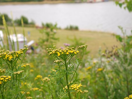 Flowers, Meadow, River, Nature, Summer